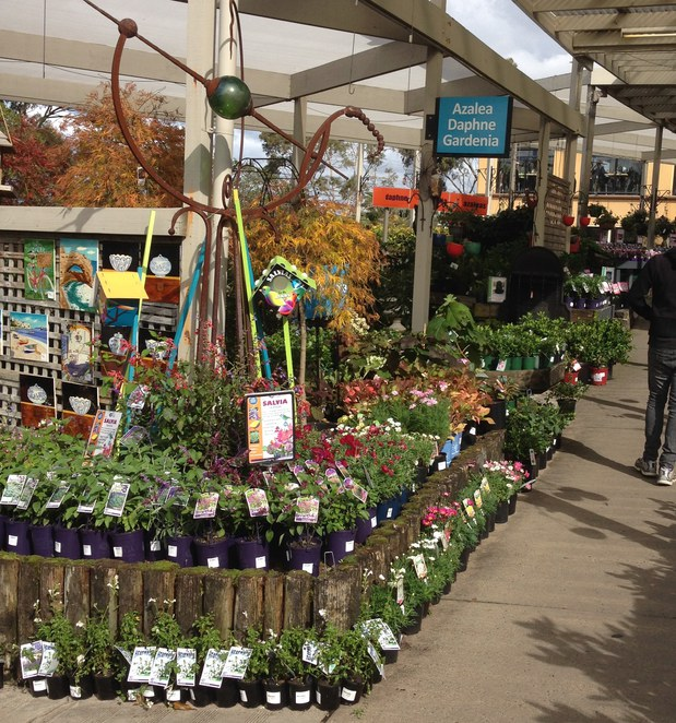 Poynton's Nursery plant selection