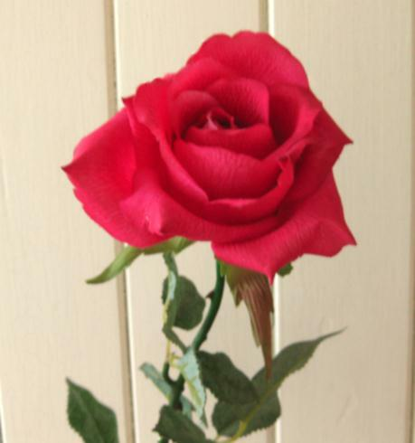 single red rose wall background