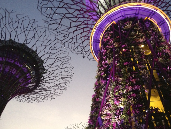 Supertree Grove, Bayfront, Gardens by the Bay, SIngapore, trees, light show, cloud forrest, the canopy, silver garden