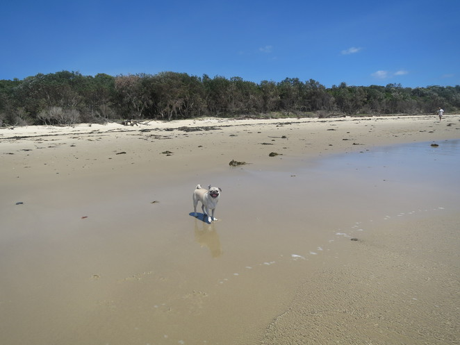 swimming creek beach, nambucca heads, coffs harbour, dog beach, dog friendly, off leash dog beach, dog swimming, beach, new south wales, creek, nature, free, captain cook lookout, morrison park