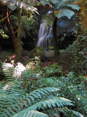 Waterfall Walk, Mount Wilson, Blue Mountains