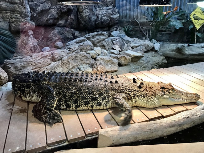 Canberra family attractions, gold creek, fun things to do Canberra's, kids activities Canberra, rainy day activities Canberra, Canberra Reptile Zoo