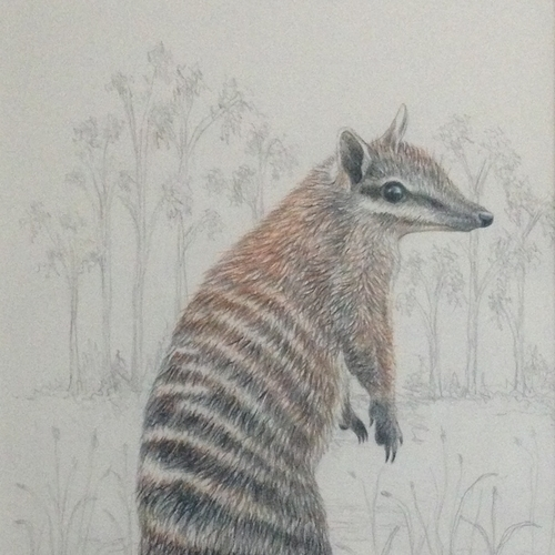 numbat, art, exhibition, endangered, charity