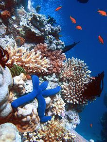 The Great Barrier Reef. Pic source: Wikipedia.
