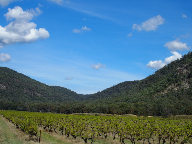 Winery in the Hunter Region