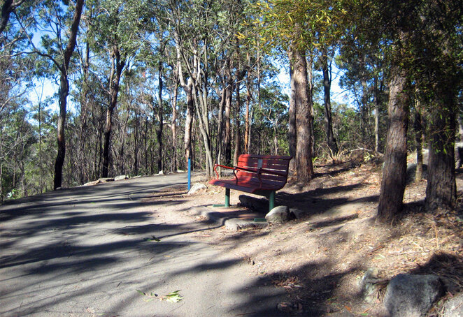 Tooheys Forest is a lovely place to walk and is the perfect starting point for a walk up Mt Gravatt