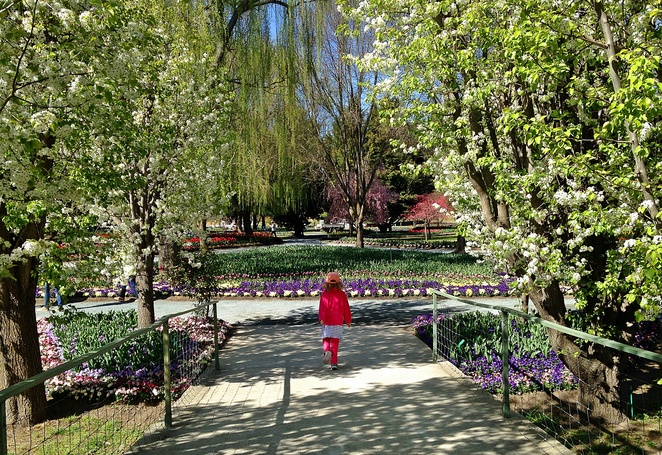 tulip top gardens, october, september, 2019, school holidays, kids, flower festival, spring events, private gardens, NSW, ACT, canberra, sutton, kids, children, things to do, school holiday activities,