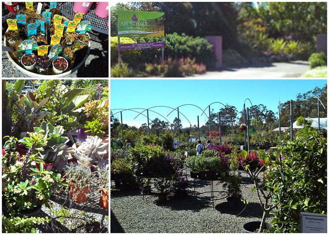 abundance, plant nursery, cafe, plants, cafe, wedding venue, NSW, port macquarie, sancrox, rawdon island,