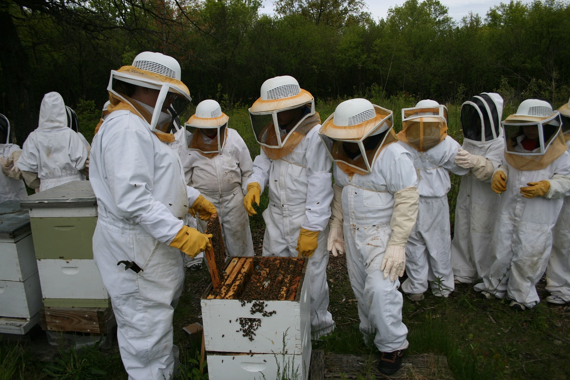 The apiary is ... Beekeeping for Beginners