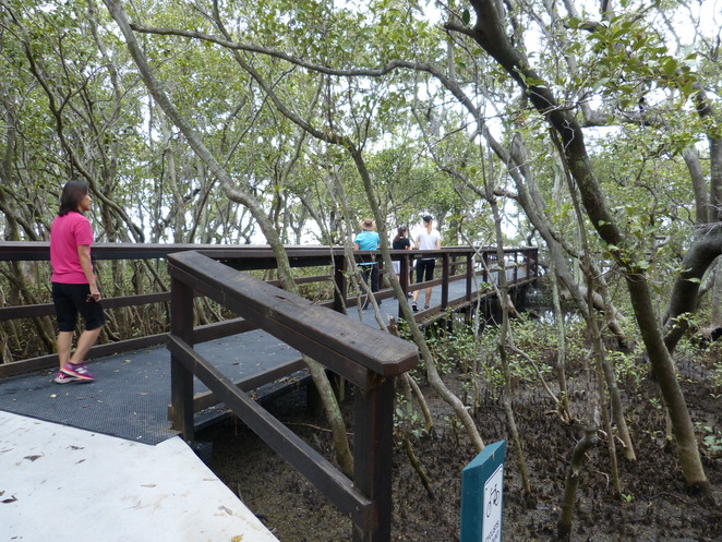 Create-a-Tour, Wynnum Wetlands mangrove boardwalk, Brisbane, birdwatching, nature walk