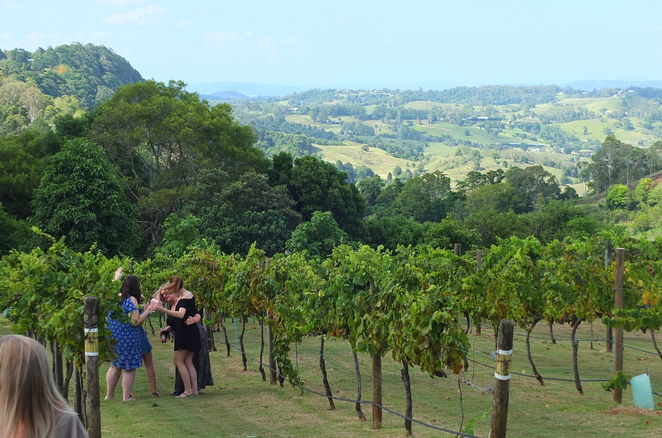 Flamehill Vineyard Annual Stomp, February 2017, Swing Central, wine-tasting, memento wine glass, Al-fresco style lunch, Black Angus beef burger, fish and chips, sweet potato and chickpea vegetable burger, pulled pork roll, trilogy of terrines, Cheese plate, wine, Montville