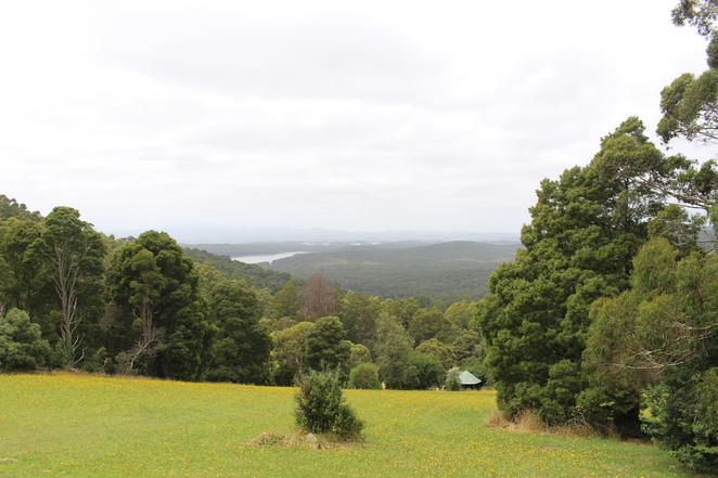 kalorama lookout