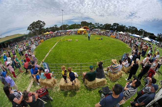 meadows country fair 2018, under tug competition, hand milking competition, community event, fun things to do, fundraiser, family fun, fun day out, fun of the fair, entertainment, live music, market stalls, fundraiser, charity, adelaide hills, amusement rides, yard dog trials, animal expo, field day, demonstrations