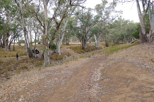 Mt remarkable trails, mtb, mountain bike, Flinders Ranges, red gum