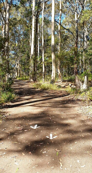 Nature, bushland, reserve, bushwalk, Newcastle, family, picnics, play