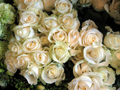 Best flowers to buy for valentine 39 s day or any romantic for Buying roses on valentines day
