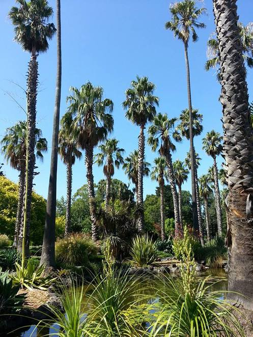 Williamstown Botanic Gardens, Williamstown, Melbourne, Melbourne gardens, palms, heritage garden,