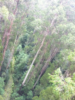 The Otway Fly Tree Top Adventure