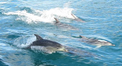 dolphins may be in danger due to human interaction Human interactions with dolphins vs human interactions with other animals while it may seem like a which are due to human involvement some of the causes.