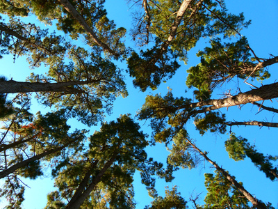 Looking up at trees.