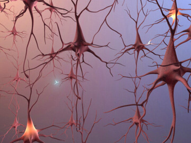 The neuron forest which is damaged by Alzheimer's taken