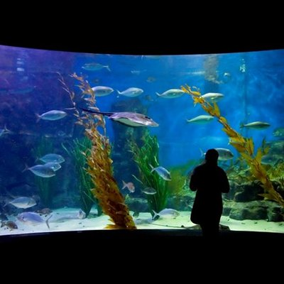 my aquarium essay Occasionally, an aquarium owner will report that they have been stricken with unusually stinky aquarium water anytime you can find an aquarium using only your nose, there is something decidedly wrong, and quick attention is indicated causes of odors.