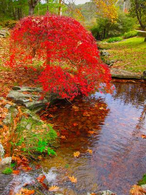 A beautiful garden in Autumn