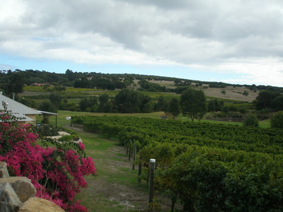 Cape Naturaliste Vineyard, Yallingup