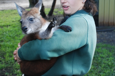 keeper and wallaby