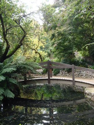 Hints of colour in early autumn at Alfred Nicholas Gardens