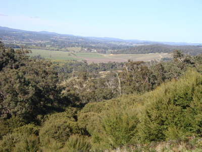 Walking in the Yarra Valley by Sue Williams