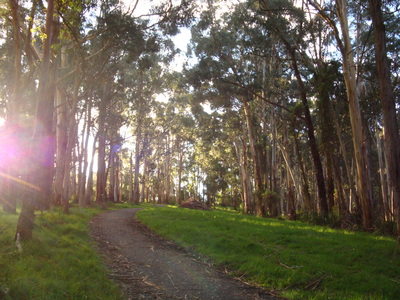 Walking near Ferntree Gully by Sue Williams