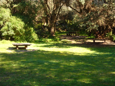 Picnic area near carpark at Bushrangers Bay