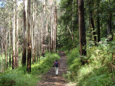 Great walking near Mt Evelyn