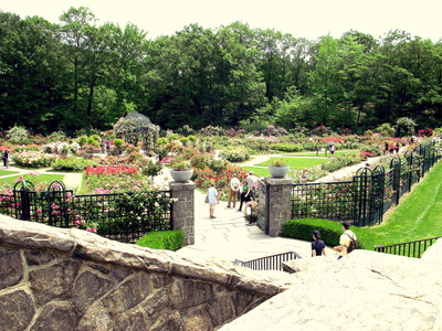 View from top of the Rose Garden