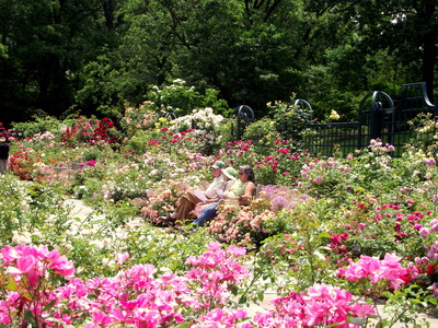 Visitors enjoy being surrounded by the roses and fragrance