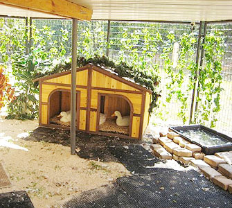 How to care for pet ducks for Build your own duck house