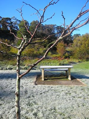 frosty bench in a park in Katoomba. Brrrr!