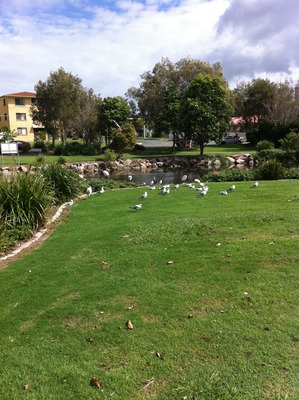 Birds - Humpybong Creek