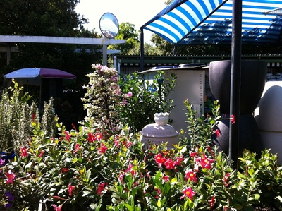 one of the views that greets you as you enter the Cottage Garden Nursery