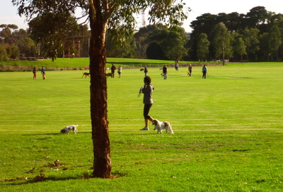 Dogs off leash area - Elsternwick Park