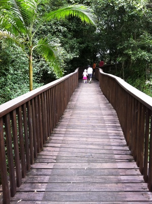 Fig Tree Walk boardwalks