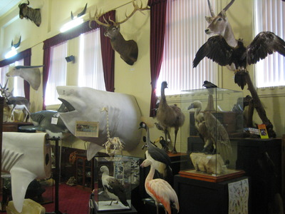 Academy Of Taxidermy Museum Of Natural History Perth