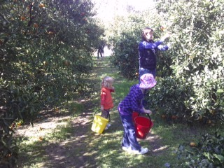 Picking from the orchard