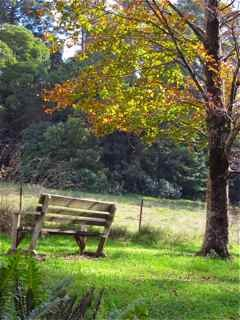 Mount Wilson sitting bench