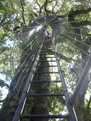Treetop Observation ladder