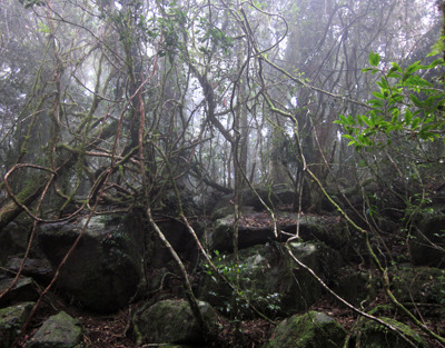 Rainforest on the journey to Best of All Lookout