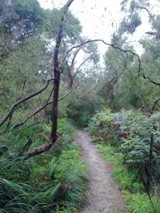 Path in Valley Reserve