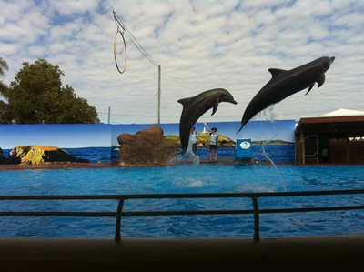 Dolphin Marine Magic, Pet Porpoise Pool