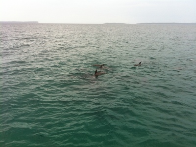 Dolphin Watch Cruises, Jervis Bay